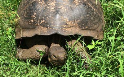 turtle energy